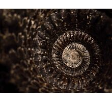 whorls of ammonite Photographic Print