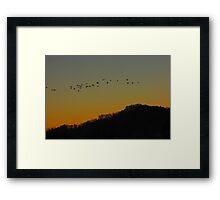 Canada Geese in pre-dawn light Framed Print
