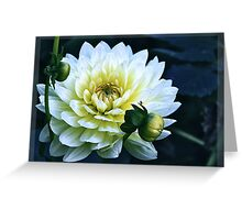Dahlia in the dark Greeting Card