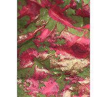 Colors in Nature Photographic Print