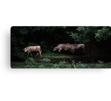 Cow Crossing 2 Canvas Print