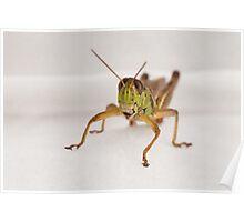 Bianca Grins for Camera (RI Grasshopper) Poster
