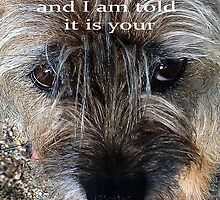 Birthday wishes, Border terrier, sniffing around, humor by Mary Taylor
