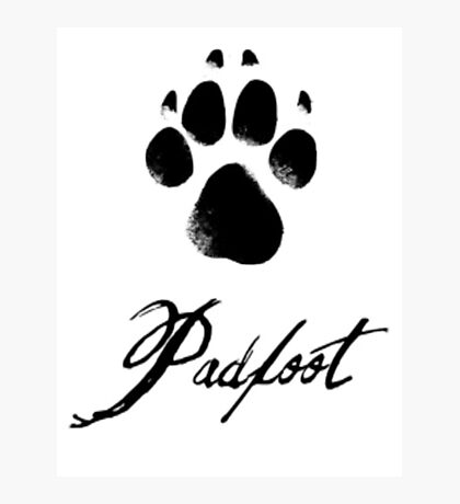 Padfoot Photographic Print
