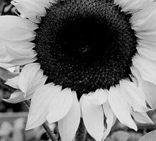Sunflower Black and White  Sticker