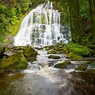 Nelson Falls in Tasmania by Paul Fleming