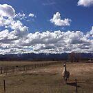 Llama of the Mesa by Marcie Alban