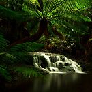 Westmoreland Cascades by Claire Walsh