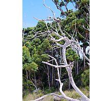 Dead Tree Trunk Photographic Print