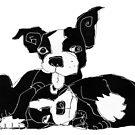 Boston terrier puppies by Matt Mawson