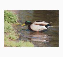 Male Mallard Duck At Lake Shoreline  Kids Tee