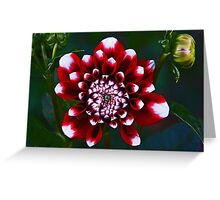 Tiger Red Dahlia Greeting Card