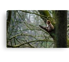 Infant Chimp Canvas Print
