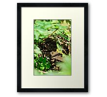 """""""In the Undergrowth"""" Framed Print"""