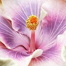 Hibiscus Rosa Sinensis by Martina Cross