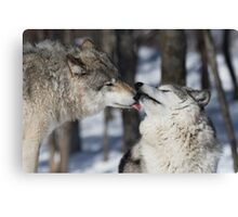 Timber Wolves in love Canvas Print