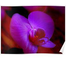 Purple Passion ^ Poster