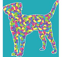Labrador Retriever, Easter Jellybean Photographic Print