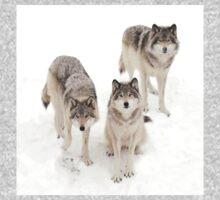 Timber Wolves Kids Tee