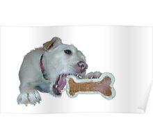 cute dog enjoys its bone Poster