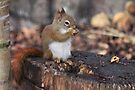 Red Squirrel by Jo Nijenhuis