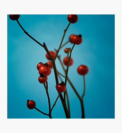 Red berries Photographic Print