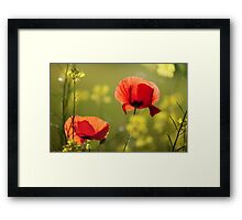 Spring Poppy Flowers Framed Print