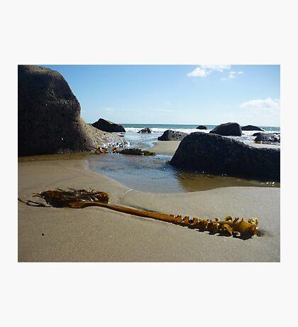 Seaweed with rocks, sand and sea at Porth Ysgo Photographic Print