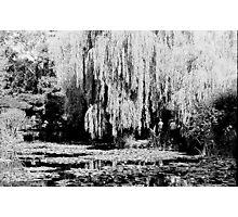 Monets Garden Photographic Print