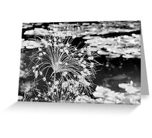 Black and White Monet Flower Greeting Card