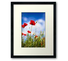 Poppy Flowers Framed Print