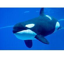 Killer whale Photographic Print