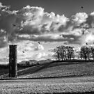 Cammo Tower - B&W by Tom Gomez