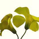 Yellow 0126 by João Castro