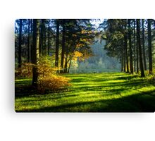 Wild Forest - Nature Photography Canvas Print