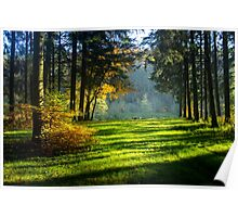 Wild Forest - Nature Photography Poster