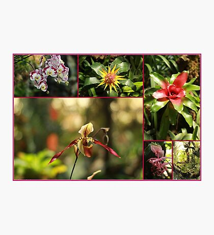 Awesome Flowers - Travel Photography Photographic Print
