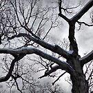 Spooky Tree by Monnie Ryan