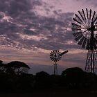 Windmills along the Nullarbor Desert by myraj