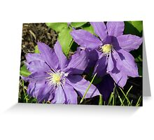 Spring Flower Series 44 Greeting Card