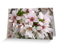 Spring Flower Series 48 Greeting Card