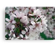 Spring Flower Series 50 Canvas Print