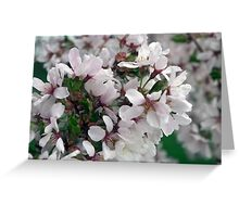 Spring Flower Series 50 Greeting Card