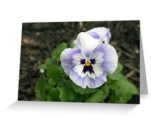 Spring Flower Series 51 Greeting Card