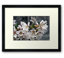 Spring Flower Series 55 Framed Print