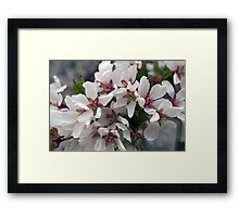 Spring Flower Series 56 Framed Print