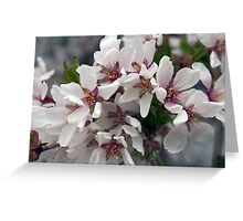 Spring Flower Series 56 Greeting Card