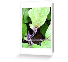 Ladybug on Japanese Eggplant (Aubergine) Greeting Card