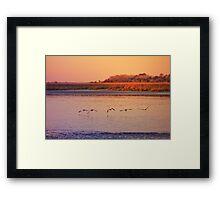 Sea birds at Sunset Framed Print