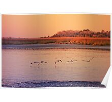 Sea birds at Sunset Poster